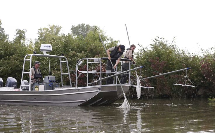 Evidence of invasive grass carp signals threat to Lake Erie