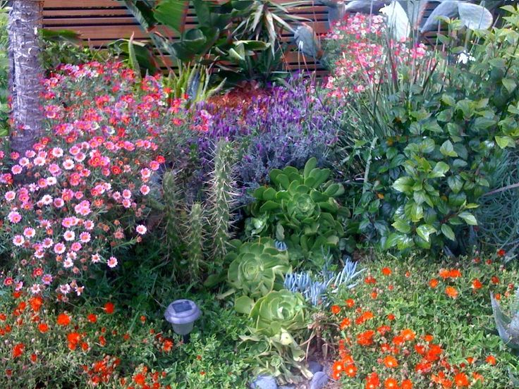71 best images about california native plant and drought tolerant plants on pinterest for Gardens in southern california