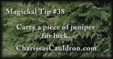Magickal Tip #38 - Carry a piece of juniper for luck.