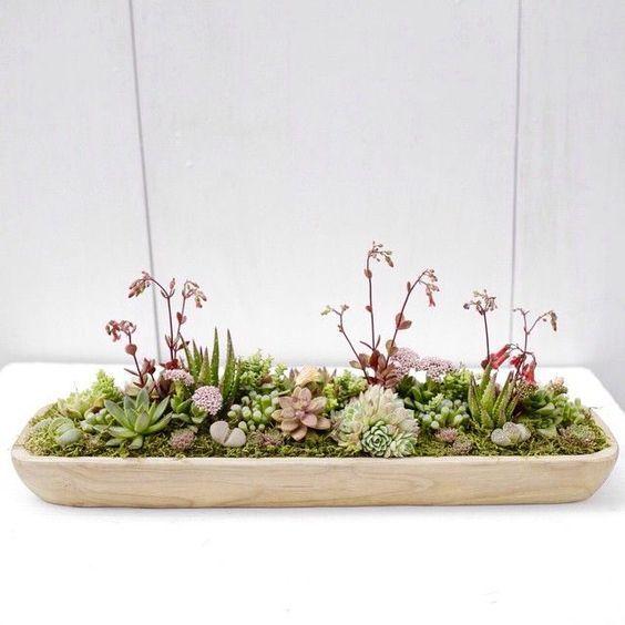 Low succulent dish garden for an outdoor centerpiece