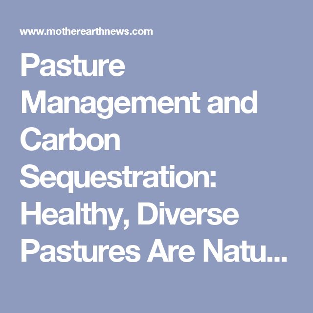 Pasture Management and Carbon Sequestration: Healthy, Diverse Pastures Are Natural 'Carbon Sinks' - Homesteading and Livestock - MOTHER EARTH NEWS