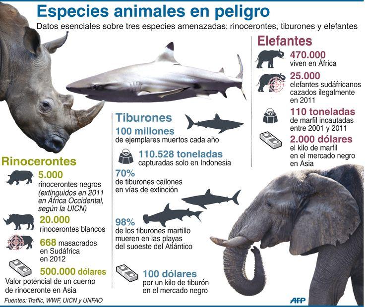 Infografía: tres especies animales en peligro de extinción