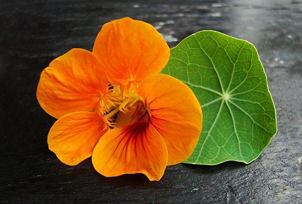 Top 5 de flores comestibles y saludables