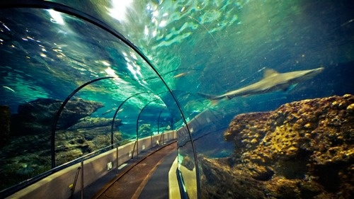 Transparent Tunnel, Barcelona Aquarium, Barcelona Spain