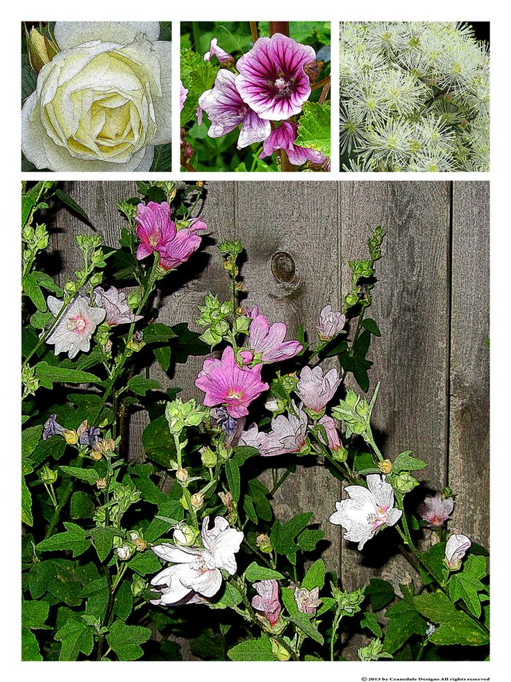 """Night Garden""   18 x 24"