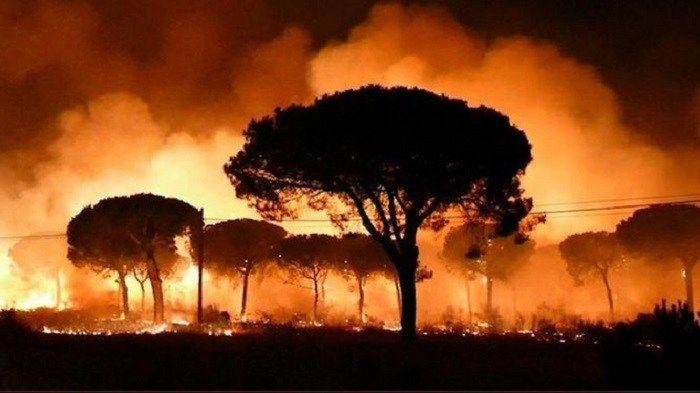 Un incendio en Doñana obliga a evacuar a más de 2.000 personas | JerezSinFronteras.es