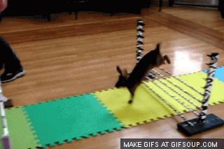 Bunny jumping competition - Imgur