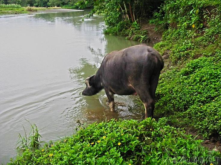 Rural Life in Lezo, Aklan, Philippines