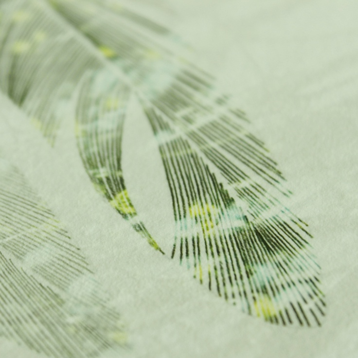 My drawings combined With photo. Detail of feathers. stinerom@hotmail.com