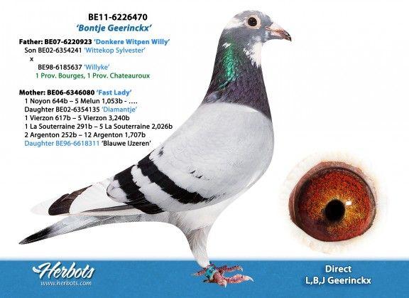 BE11-6226470 • L, B, J GEERINCKX