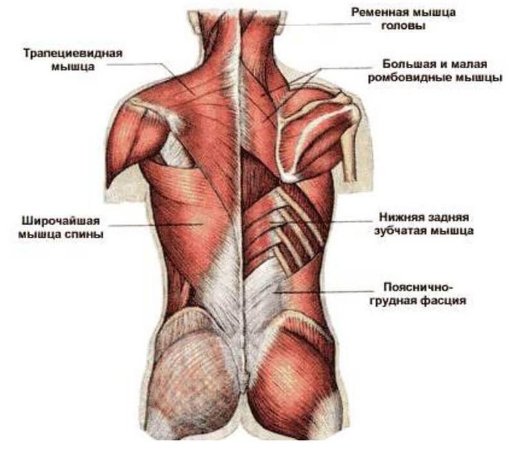 Можно ли спасти поясничную мышцу