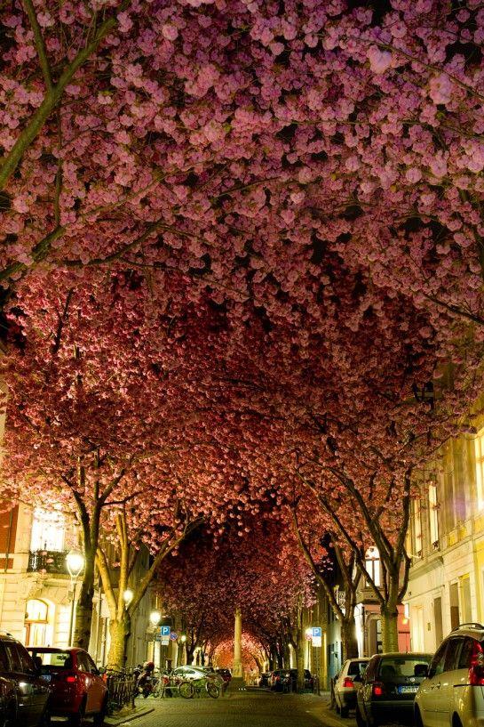 a flowered street in Bonn, Germany