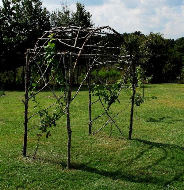 Pinterest Garden Ideas Grape Trellis Photograph