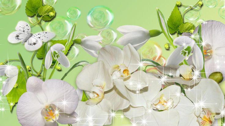 orquídeas snowdrops bolhas