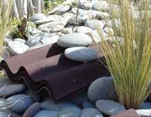 Tips on how to create a New Zealand skink friendly garden.