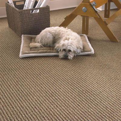 Chester loves his Beaulieu carpet