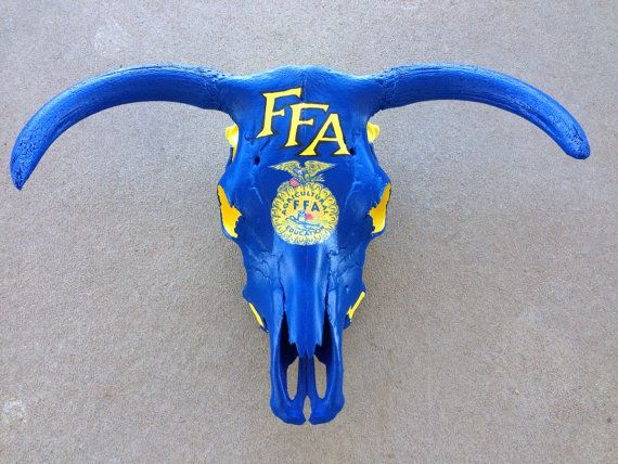 Custom Hand Painted FFA Agricultural Education Future Farmers of America Cow Skull  on Etsy, $199.99
