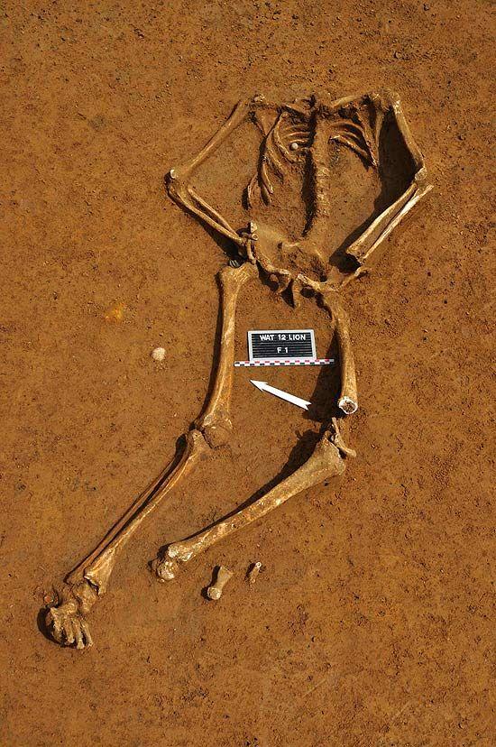 Esqueleto de soldado britânico é achado quase dois séculos após batalha de Waterloo, na região da atual Bélgica.