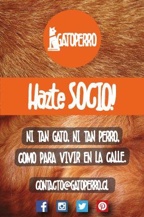Flyer 10x15 Fundación GatoPerro Los Andes