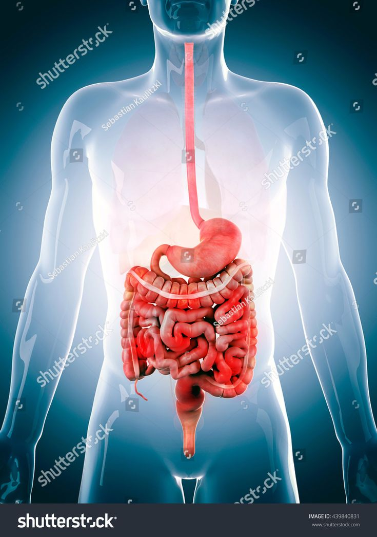 3d rendered, medically accurate 3d illustration of the human digestive system