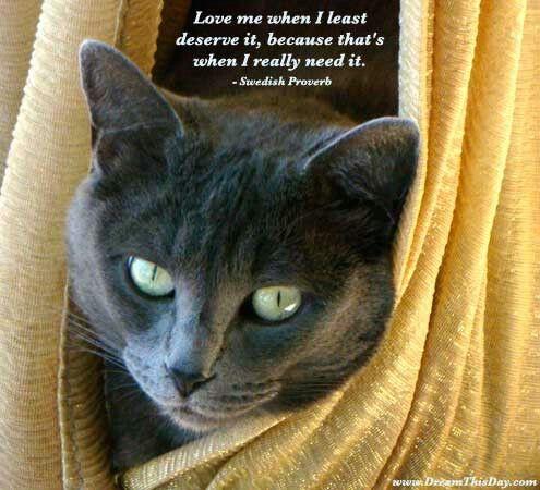 Soooo true.. Animal lover.