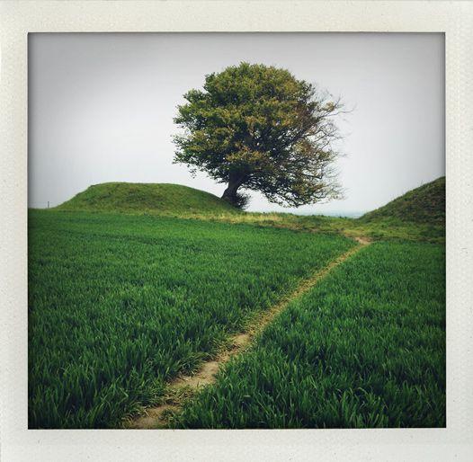 Tree (Rönneberga backar, Skåne, Sweden).
