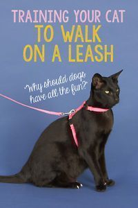 While we can all agree that #cats are safest from the dangers of predators, disease, and traffic when kept indoors, walking your cat on a harness and leash can be a wonderful way to let your feline companion enjoy a bit of outdoor time while ensuring his safety!