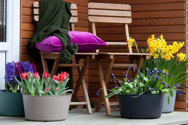 Planten in de tuin : maart #tuin http://blog.huisjetuintjeboompje.be/planten-in-de-tuin-maart/