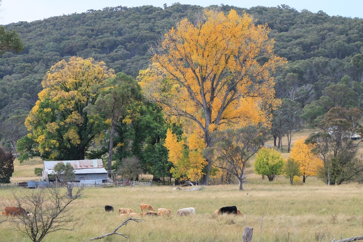 Autumn in Armidale, New England - UNE Partnerships