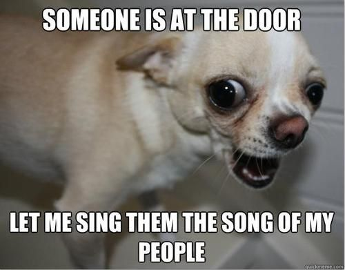 "Hahaha! - ""Let me sing them the song of my people."" - Teacup chihuahua humor"