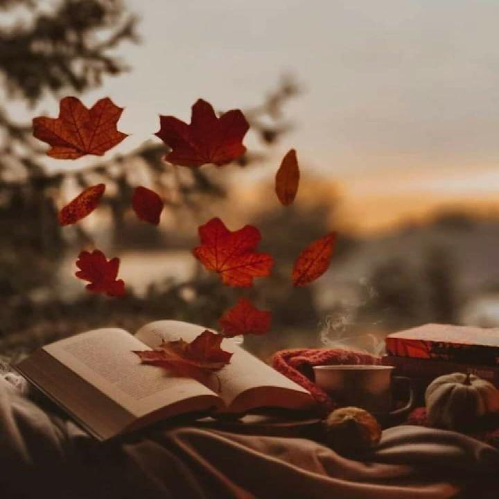 خريف العمر الحقيقى لا يقاس بمقدار تساقط أوراق أيامك من شجرة عمرك بل يقاس بمقدار تساقط أوراق أحلامك Plants