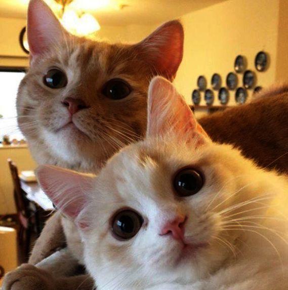 How Dare You Cute Cats Pretty Cats Cute Animals