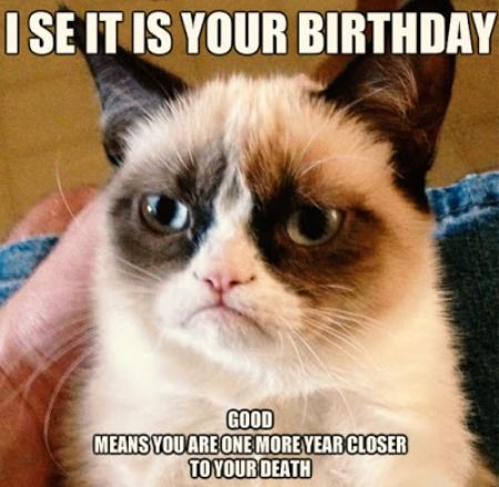 The 25 best Happy birthday funny cats ideas – Humorous Cat Birthday Cards