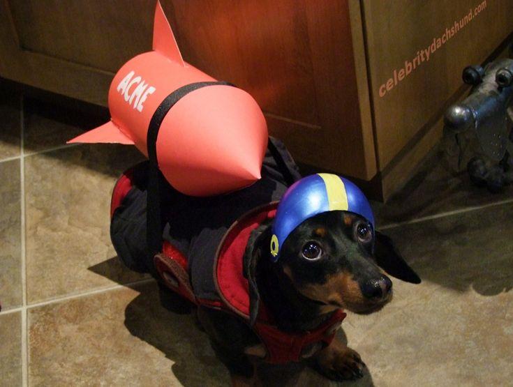 Dachshund Wiener Dog Rocket Costume
