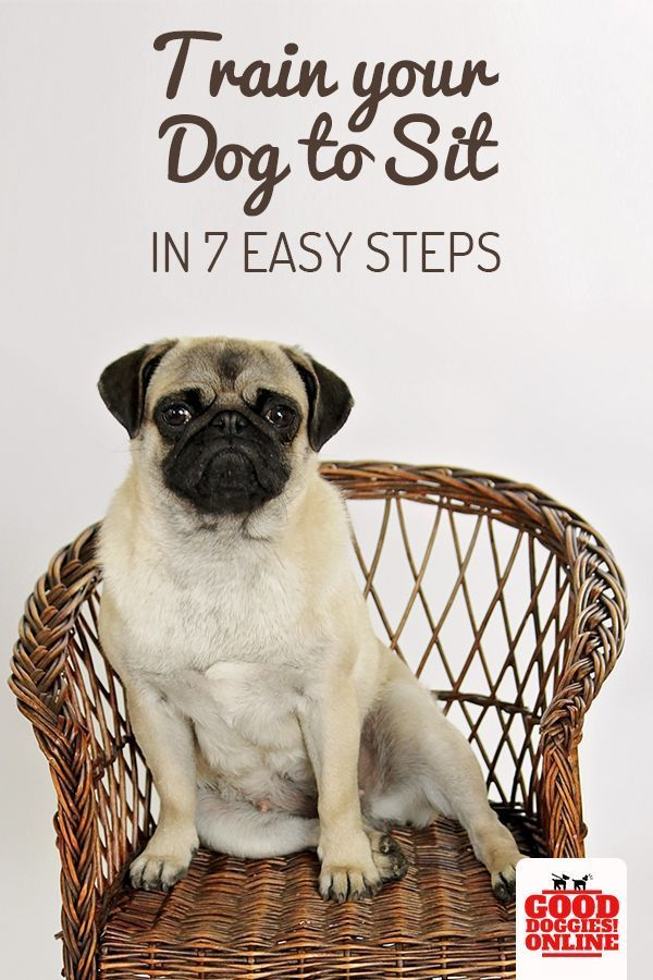 How To Train Your Dog To Sit Training Your Dog Dog Training