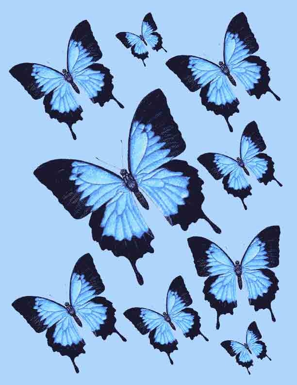 Ulysses-Butterfly