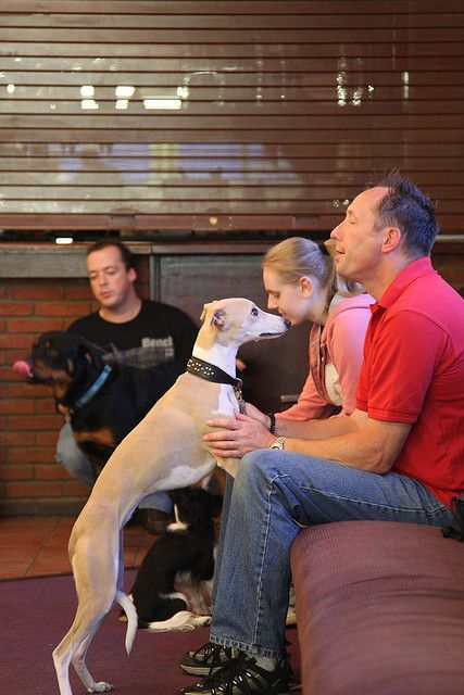 Dog Obedience Training     ...for Dog Training DVDs  click here... http://www.trainingdogsvideos.com