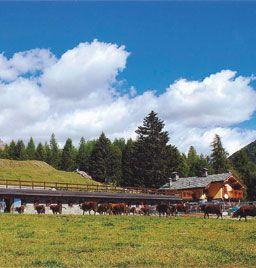 Valle d'Aosta - Alpage  Crespin - Brusson, Val d'Ayas - Percorso: - dalla frazione Extrapieraz di Brusson seguire le segnalazioni fino al parcheggio e proseguire a piedi sul sentiero segnalato per circa 40 minuti;  - dal Col di Joux, seguendo il percorso segnalato lungo il Ru Courtoud. Tempo di percorrenza: 1 ora e mezza.