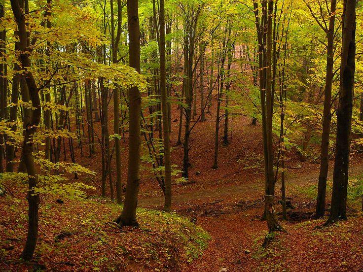A Bükki Nemzeti Park területein megtalálhatjuk az Alföldre jellemző erdős-sztyepp vidékeket, a Tisza-menti árterek ligeterdőit, vizes élőhelyeit, a középhegységek változatos erdőtársulásait, hegyi rétjeit, sziklagyepeit. Magyarországon minden negyedik barlang a Bükkben van, összesen 1100 tartozik a nemzeti park kezelésébe, közülük a legismertebb a Szent István-barlang és az Anna-barlang.