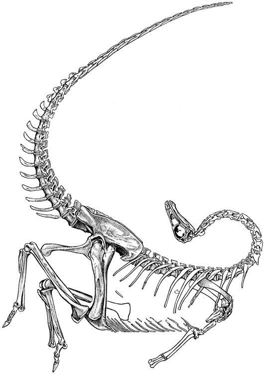 ornithomimus skeleton