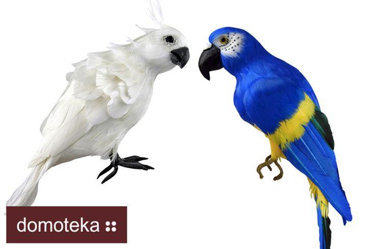 Niecodzienna dekoracja wykonana ze styropianu pokrytego naturalnymi piórami do złudzenia przypomina prawdziwa papugę. Interesująco będzie wyglądać pojedynczo, lub w grupie. Figurka Cacadu nawiązuje też do popularnego trendu tropikalnego. Barwne piórka przemycą kolor do każdego wnętrza i wprowadzą wakacyjny nastrój. HOUSE & more.