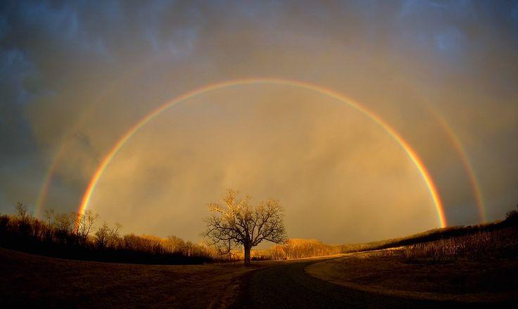 Double rainbow over lone tree