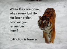 Stop Animal Extinction Quotes Google Search Help The Animals