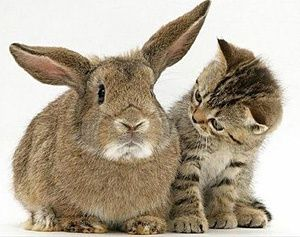 Dexie strikes up a conversation with Big Bunny,,,,,So What do ya think,,,,,,,Will the plan work or not,,,,,,,,,