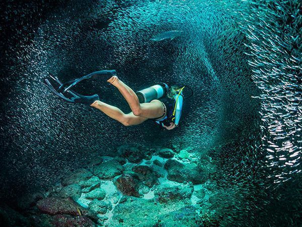 We've rounded up the best underwater cameras and housings to take scuba diving in 2017.