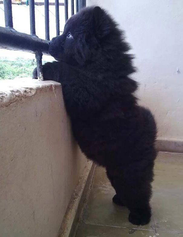 peluche-chien-noir