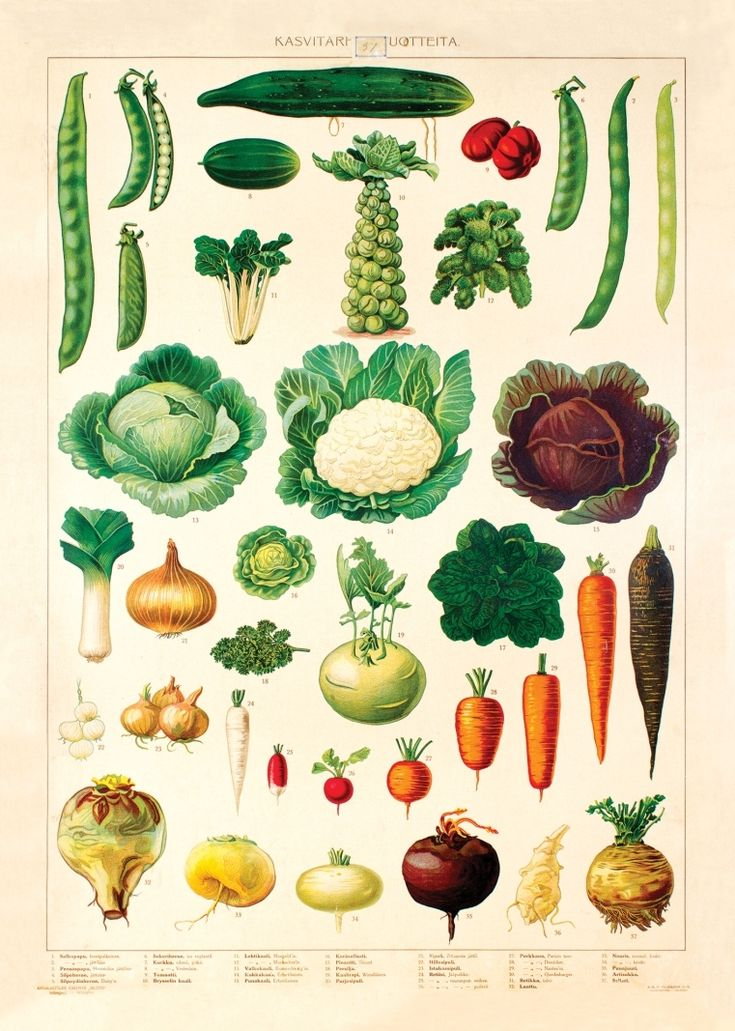 Keittiöpyyhe Kasvitarha (IS101853)
