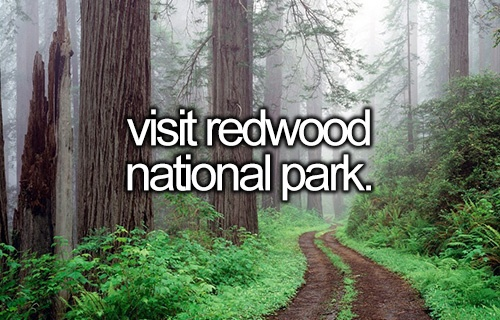 visit redwood national park #bucketlist: