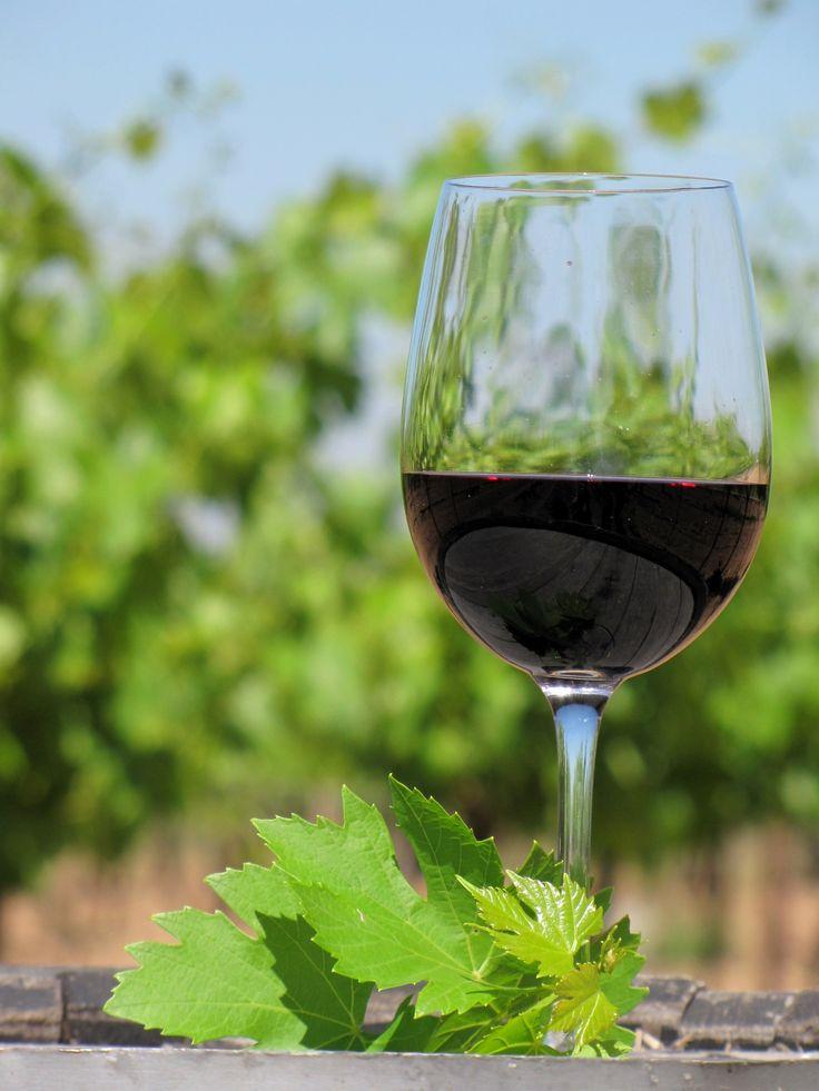 El vino mexicano. Contra viento y marea. Un reportaje sobre las broncas históricas que ha tenido el vino en México. En cada trago de vino va la historia de una bebida que se las ha visto negras para destacar en México. Ya lo dice la frase: lo que no mata, hace más fuerte. http://cronicasdeasfalto.com/el-vino-mexicano-contra-viento-y-marea/