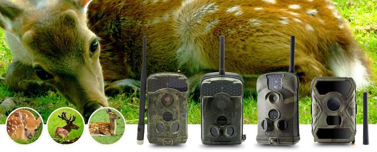 Hunting Cameras Wholesale From China  , Game Cameras, Trail Cameras, Video Camera for Hunting, Infrared Hunting Camera, Waterproof Hunting Camera, at Factory Wholesale Price  From China,Hunting Cameras, Wholesale Various High Quality Hunting Cameras Products from Global Hunting Cameras Suppliers and Hunting Cameras Factory.